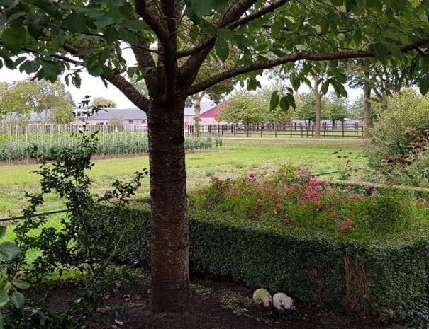 Heerlijke tuinview zijkant